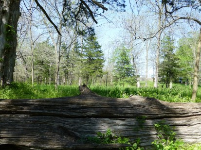 A view of the battlefield from behind a fallen log.